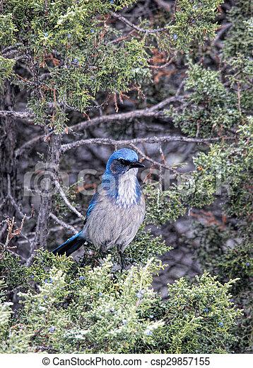 Un ave azul en el árbol - csp29857155