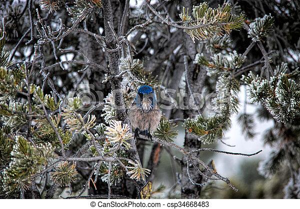 Pájaro azul de montaña en árbol helado - csp34668483
