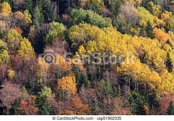 Montaña Color árboles Otoño Textura Plano De Fondo Bosque