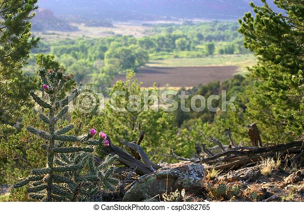 Mountain Vista - csp0362765