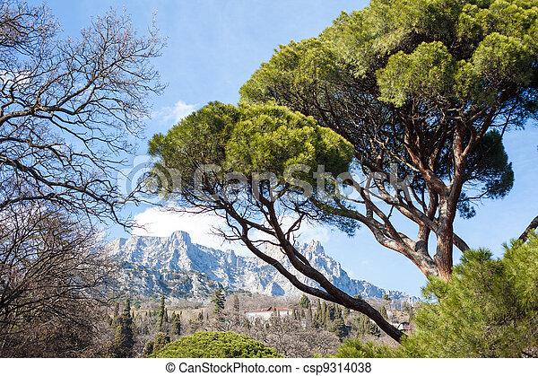 montañas, paisaje, árboles - csp9314038
