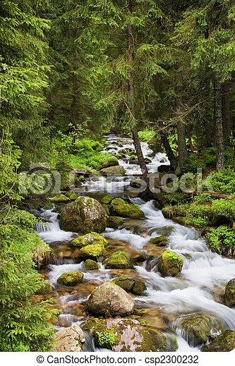 montañas, tatra, corriente, bosque - csp2300232