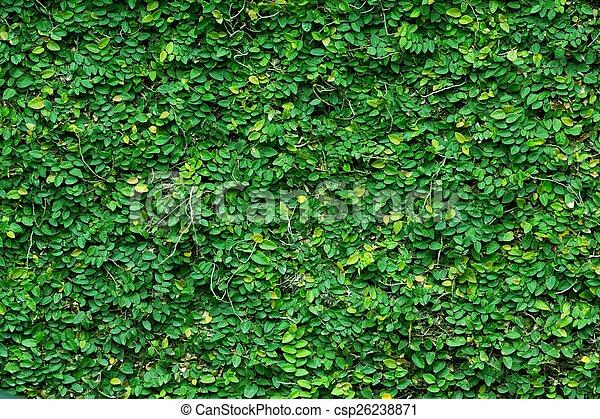 Trasfondo de planta de escalada verde - csp26238871