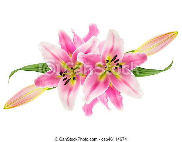 Montage of pink lilies on white collage of pink oriental stargazer montage of pink lilies on white csp46114674 mightylinksfo