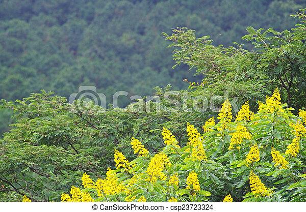 Fiori Gialli In Montagna.Tropicale Montagna Fiore Giallo