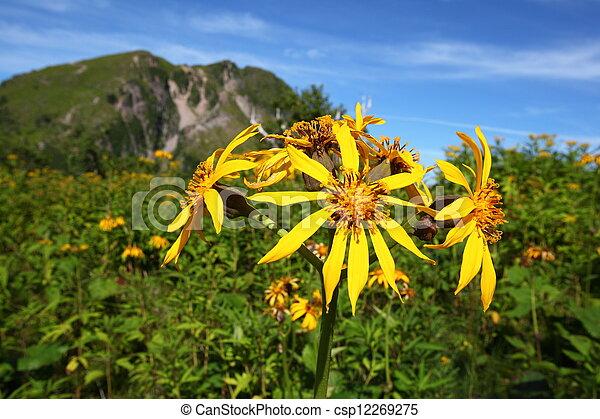 Fiori Gialli In Montagna.Montagna Fiore Giallo Tochigi Nikko Shirane Mt Giappone