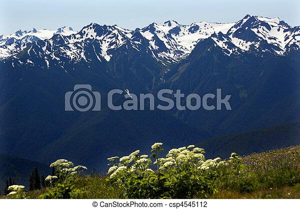 montagne, olimpico, cresta uragano, washington, parco nazionale, neve - csp4545112