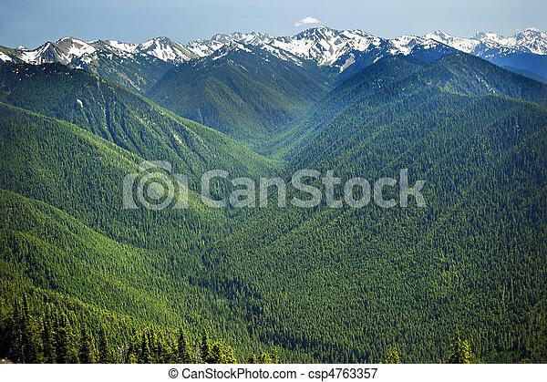 montagne, olimpico, valli, cresta, parco, nazionale, washington, neve, pacifico, stato, verde, nord-ovest, linea, hurricaine, piante sempreverdi - csp4763357
