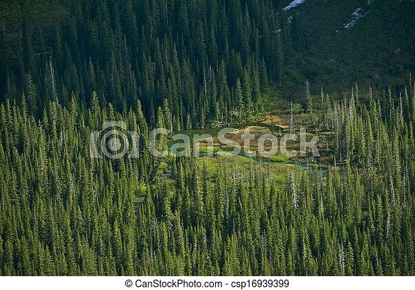 montana, selva - csp16939399