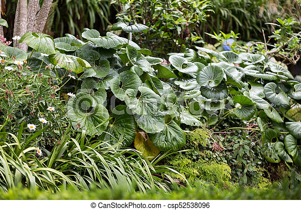Monte gardens in funchal on madeira, portugal stock photographs ...