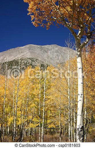 Mt. Shavano - csp0181603