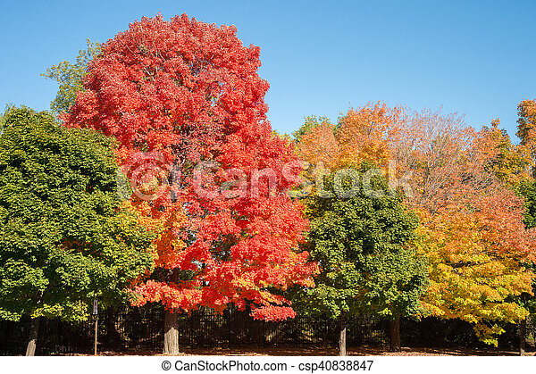 herbstfarben montreal baume herbst farben canada ahorn stockfoto 2015 mode