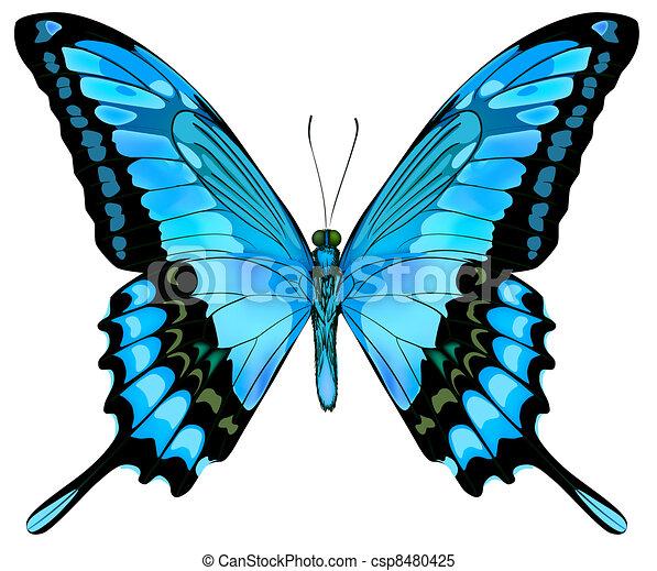 mooi, blauwe , vector, vlinder, vrijstaand - csp8480425