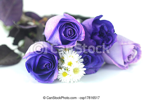 mooi, bouquetten, viooltje, chamomiles, rozen - csp17816517