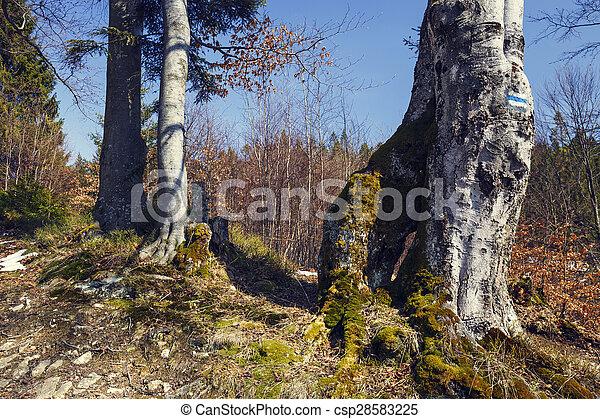 mooi, herfst, scène, bos - csp28583225