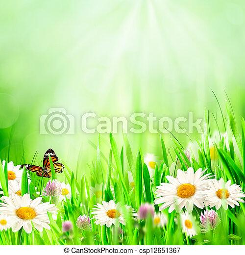 mooi, lentebloemen, chamomile, achtergronden - csp12651367