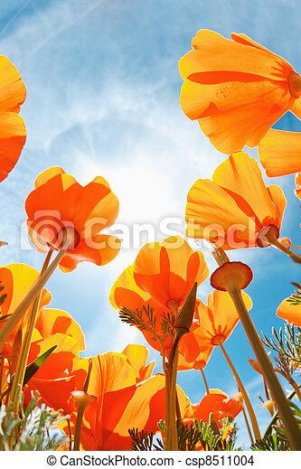 mooi, lentebloemen - csp8511004