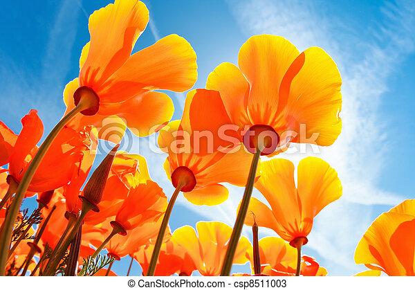 mooi, lentebloemen - csp8511003