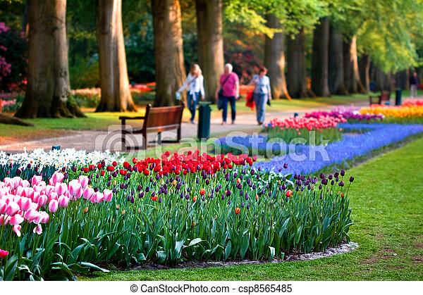 Mooi nederland tuin kleurrijke bloemen keukenhof mooi