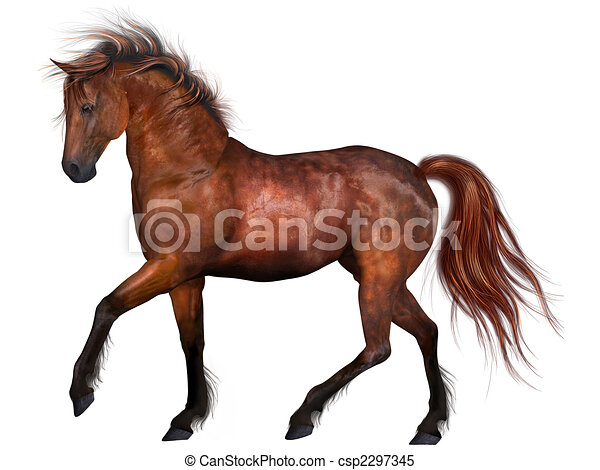 mooi, paarde - csp2297345