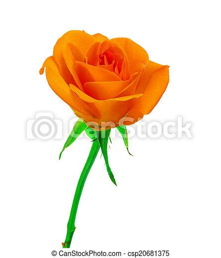 mooi, roos, sinaasappel - csp20681375