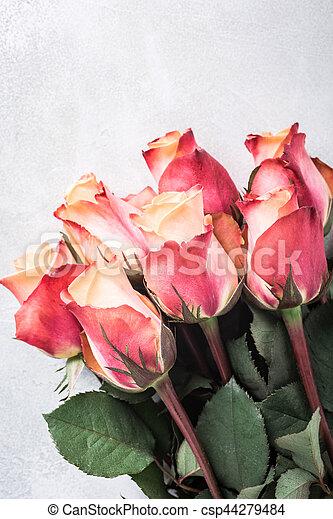 mooi, rooskleurige rozen - csp44279484