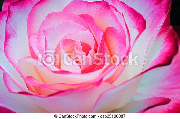 mooi, rose kwam op - csp25100087