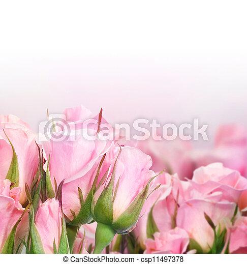 mooi, rozen - csp11497378