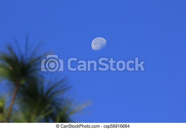 Moon and daytime pine leaves - csp56916684