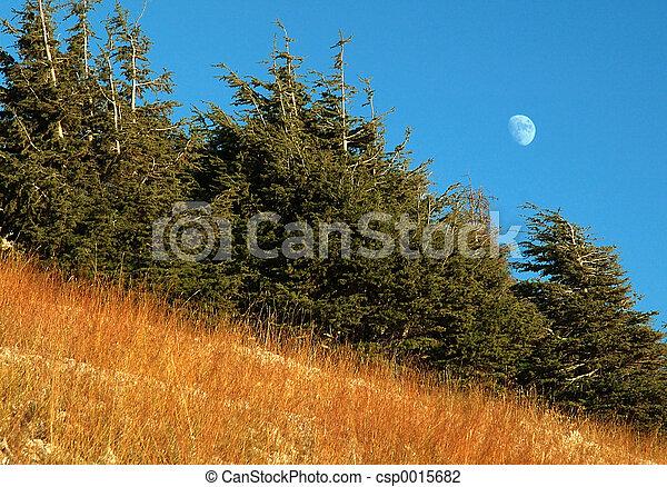 Moon behind trees 2 - csp0015682