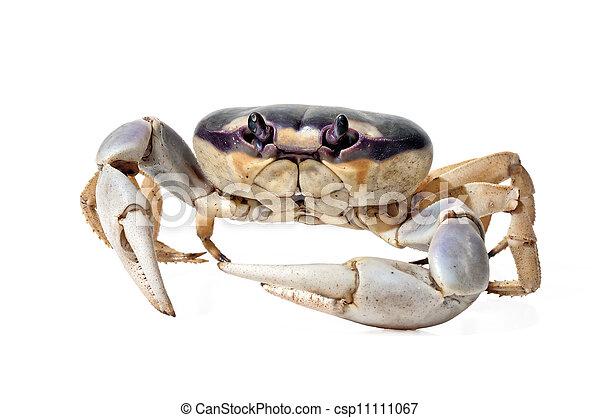 Moon Crab - csp11111067