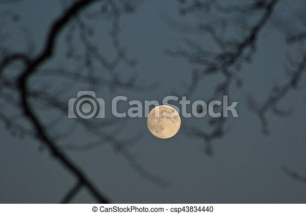 Moon in the sky - csp43834440