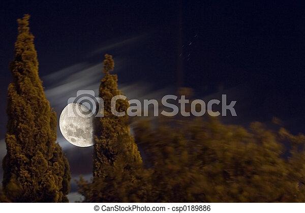 moon lit trees - csp0189886