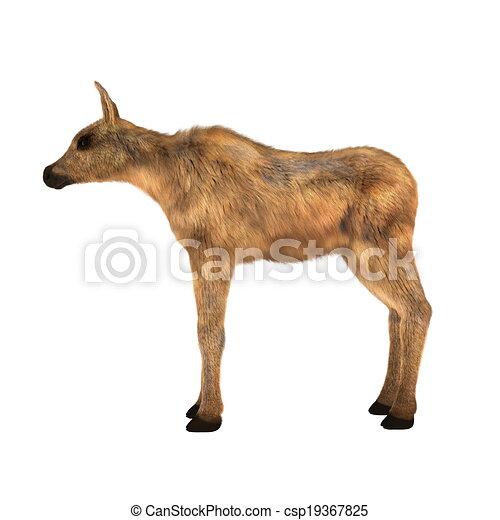 moose - csp19367825