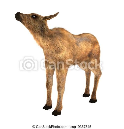 moose - csp19367845