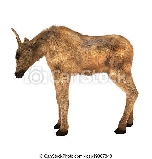 moose - csp19367848