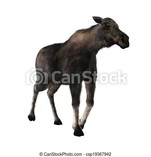 moose - csp19367942