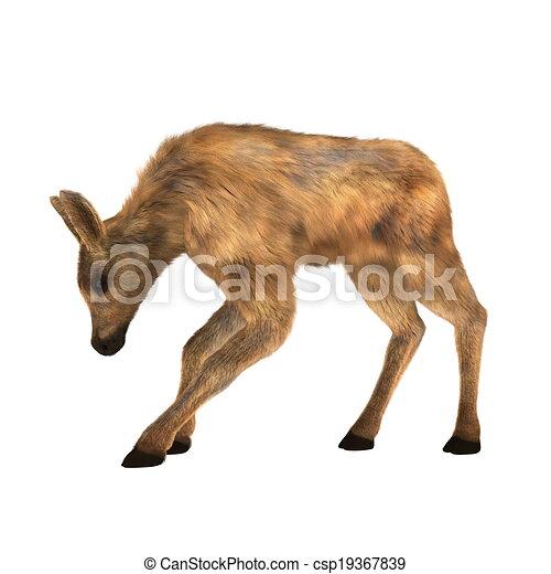 moose - csp19367839