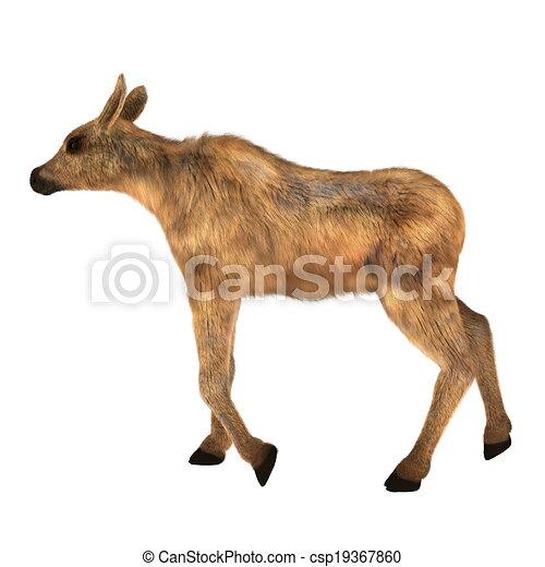 moose - csp19367860