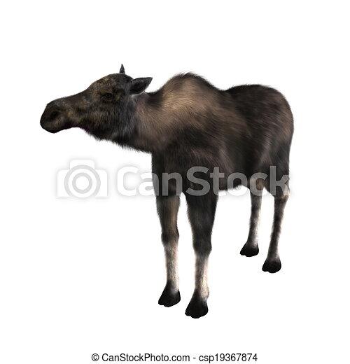 moose - csp19367874