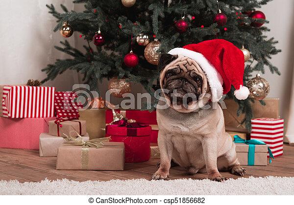 Mops Bilder Weihnachten.Mops Weihnachten