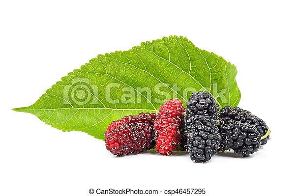 Mulberry aislado en el fondo blanco - csp46457295