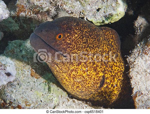 Una anguila de color amarillo - csp6518401
