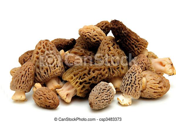 Morel Mushroom - csp3483373