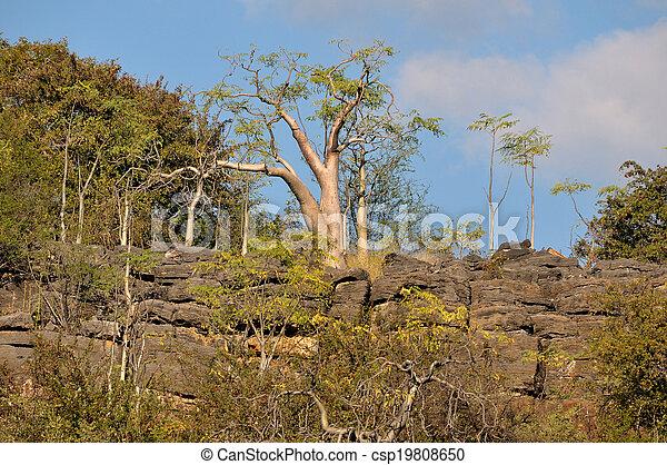 Moringa tree - csp19808650