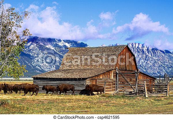 Mormon Row Barn in the Grand Tetons - csp4621595