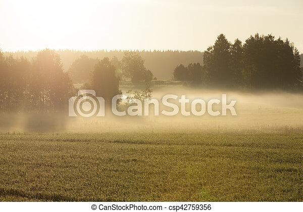 Morning fog in meadow - csp42759356