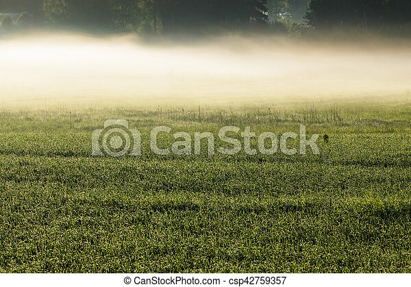Morning fog in meadow - csp42759357