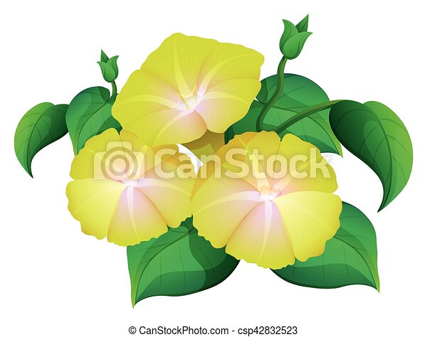 Morning glory in yellow color illustration morning glory in yellow color csp42832523 mightylinksfo