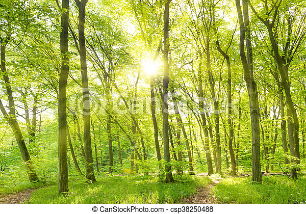 Morning in sunny forest - csp38250488